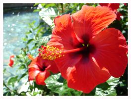 Photo - Red Flower by BeZaX