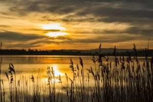 Golden ponds by themighty