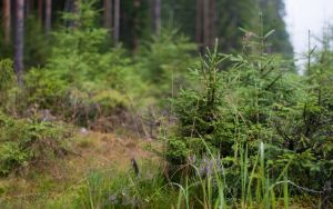 rainy day in the woods by Henrikson