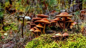 Magical Fungus by matchieck