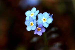 Little blue Flowers by TheAprilChild