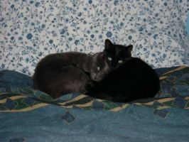 Cats 004 by Moose-Stock
