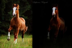 galloping horse voor En Na by Orontolover