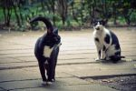 Catwalk by DrOfPhotography