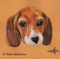 Little Beagle by Emi-Gemini