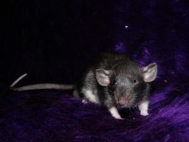 the evil eye by Itchys-rats