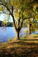 Lake Stock 1 by CNStock