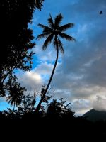 Princeville Palm by Utukki-Girl