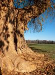 Ancient Osage by consine