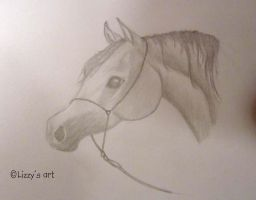 Arabian Stallion by Lizbeth-Lund
