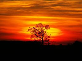 lonely tree at sunset by thomato80