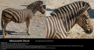 Zebra Stock 2 by Melyssah6-Stock