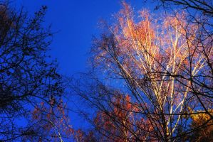 Golden Autumn Flies Away #2 by Liudochka