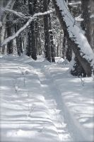 Snowshoe Path by Love2B