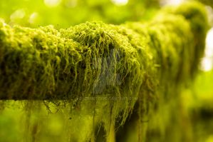Mossy by Shzphoto
