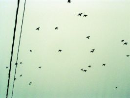 Birds flyin' high by Meireis
