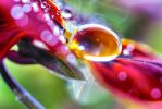 droplet by Mars-Hill