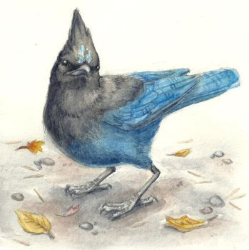 Steller's Jay Watercolor by Aki-rain