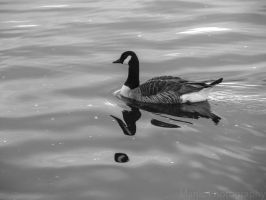 Lone Goose by mandeax