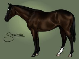 Hip 11 Bid - Struthio by Greatalmightyqueen