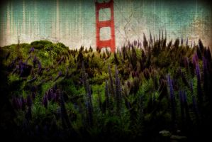 San Francisco Lupines by JtheQ