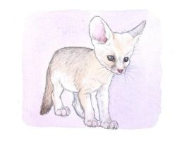 fennec fox by moussee
