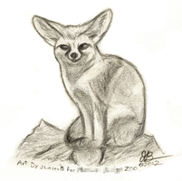 Fennec Fox by JLindseyB