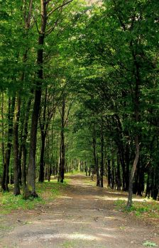Path To The Woods by stefanpriscu