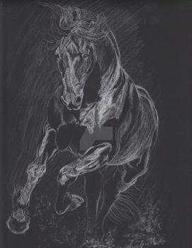 Into the light - Friesian Stallion by amequinedesign