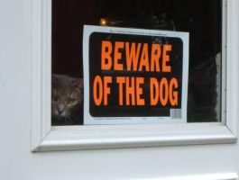Beware Of the Dog by sherln