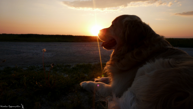 The dog and the Sun by Tardifice