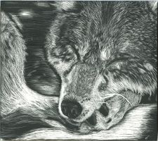 ScratchBoard Wolf by GothicLeafeon