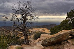 Mount Lemmon by ariseandrejoice