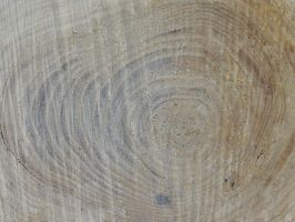 Wood Texture 11 by Ox3ArtStock