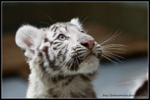 White cuteness II by AF--Photography