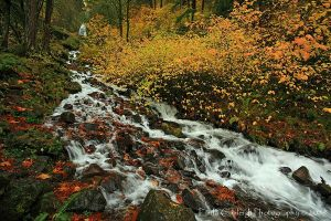 Wahkeena Creek comes alive by La-Vita-a-Bella