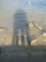 Shadows in the water by Sophie-shoots