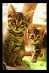 Camera Curious Kits by TeaPhotography