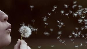 Dandelion by Logas69