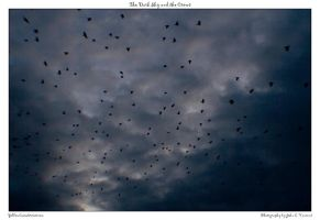 The Dark Sky and the Crows by yellowcaseartist