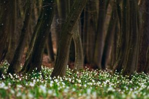 leucojum forest by mescamesh