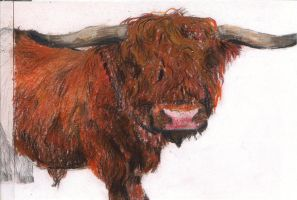 Highland Moo by andreawillette