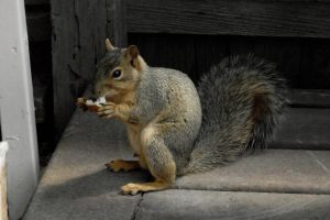 fairytale-how to squirrel bread proverb-serial 3 by sonafoitova