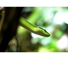 oh, a green banana!... by 13-septembre