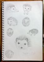 Page from Sketch Book - Hedgehog Study by AnhuiPrincess