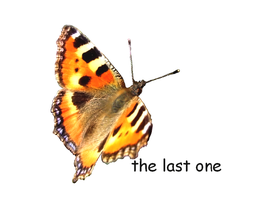 the last one by sisila1