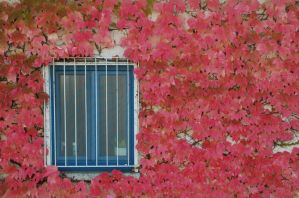 Autumn by phq