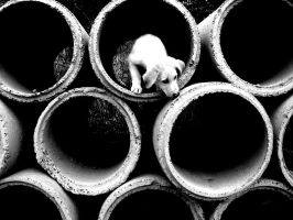 Puppy in a Pipe by MiDulceLocura