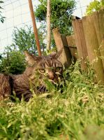 Cat in the garden by frimmi