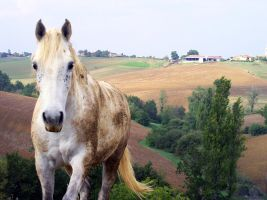 White Horse 1296860 by StockProject1